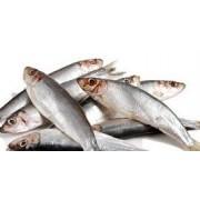 Proies / poissons